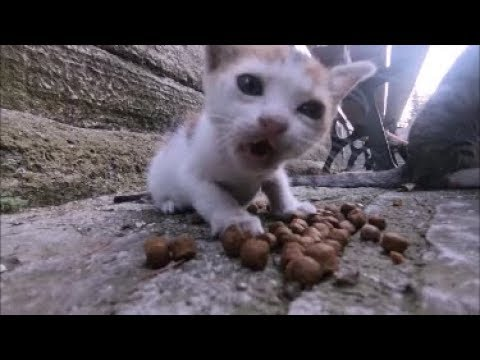 Little kitten doesn't want to share her food with adult cats