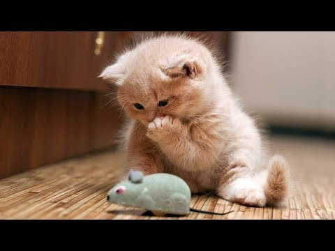 Cute and Funny Cats And Kittens Video 2018 - Funny Cat compilation
