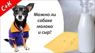 Можно ли собакам молоко и сыр?