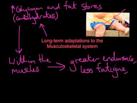 Long-term adaptations - Musculoskeletal and Energy systems part 1