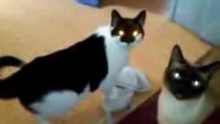 Cats steals Bras!!(, 2011-04-19T17:55:48.000Z)