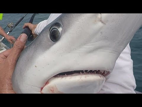 Shark Fishing On Size Matters With Kevin McKie.