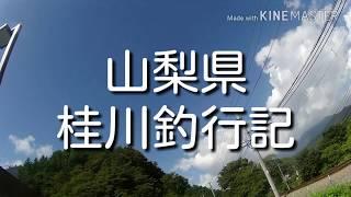 【ドキュメンタリー】テンカラ大魔王山梨県桂川釣行記。大物の気配!