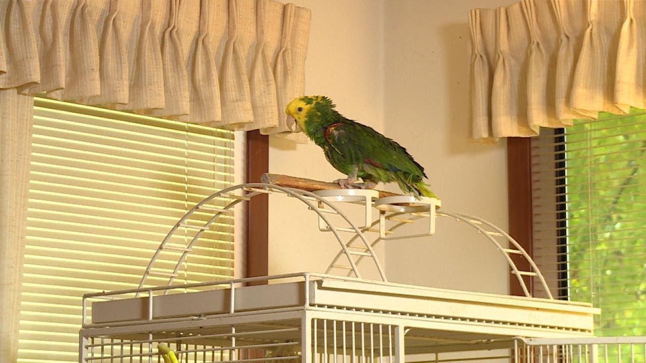 concerned-ups-driver-calls-911-after-parrot-cries-help-me