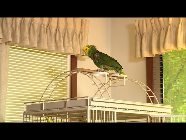 Concerned UPS Driver Calls 911 After Parrot Cries 'Help Me'