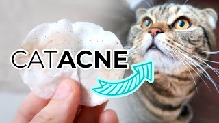 FELINE ACNE TREATMENT FROM HOME: How To Remove Cat Acne or Blackheads From Your Cats Chin