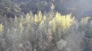 DSCN9168김선일한국화화실   고향  정남진  아침 고요한 대나무 숲01