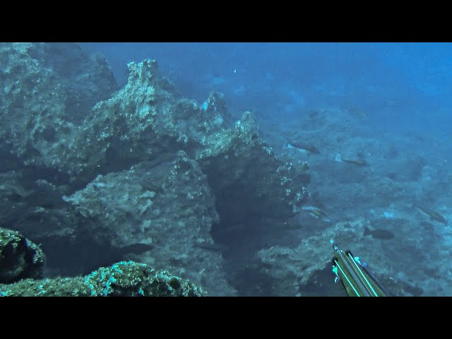 Epic 100+ Groupers Gone Wild |Spearfishing Life 🇬🇷