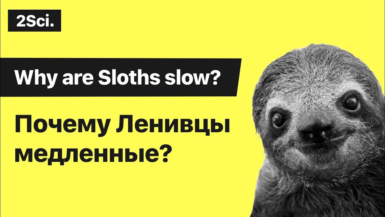 почему ленивцы такие медленные