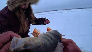 ЛЕСКИ ТРЕЩАТ И РВУТСЯ ЭТО КАБАНЧИКИ ТАЕЖНОГО ОЗЕРА Первый лед Крупный окунь Рыбалка на блесну