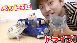 ペット3匹に車買ってドライブさせたらかわい過ぎた! thumbnail