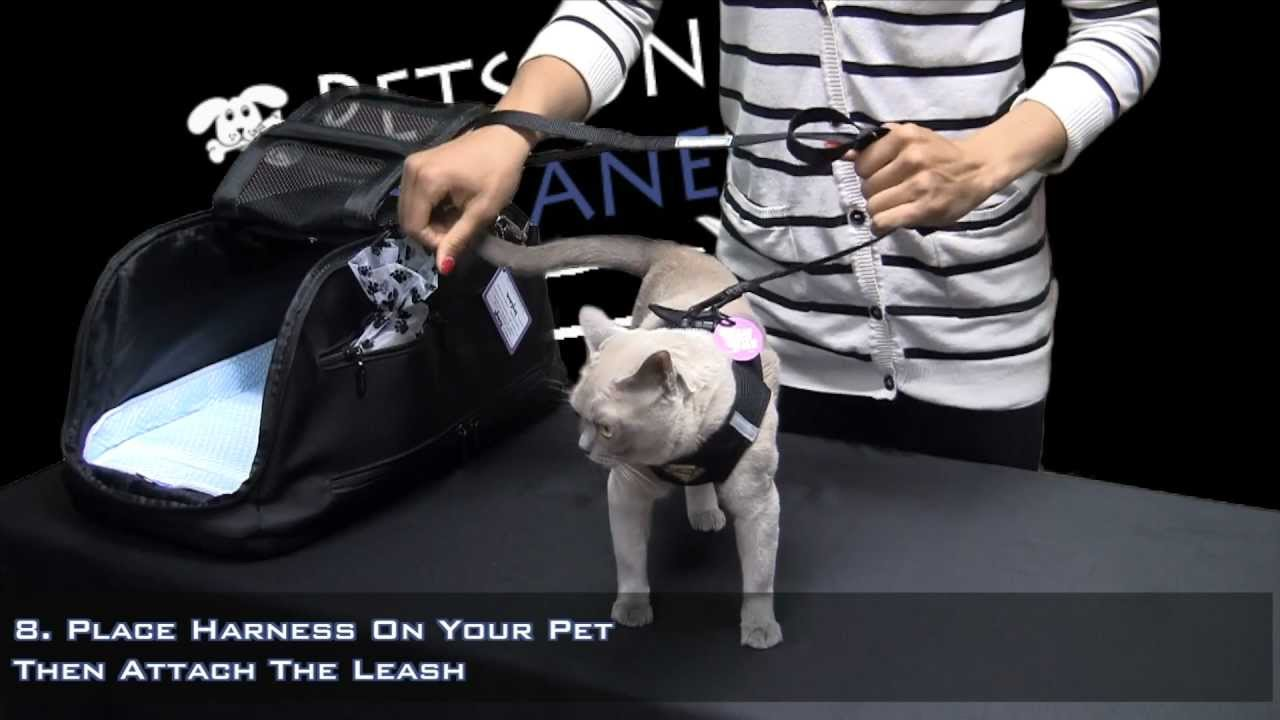 Pets On Airplanes How To Prepare Your Pet For In Cabin Airplane