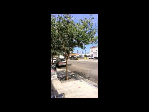 Tree Mapping in the DTLA Arts District 7/12/14