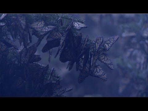 Capítulo 1 | Las alas del sol: bosques templados