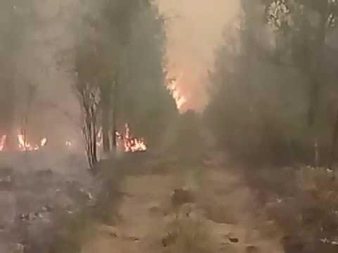 Огнеборцы вырвались из кольца лесных пожаров