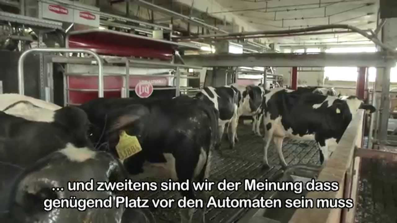 Lely Astronaut A3 - Large dairy in Germany (German / Germany)