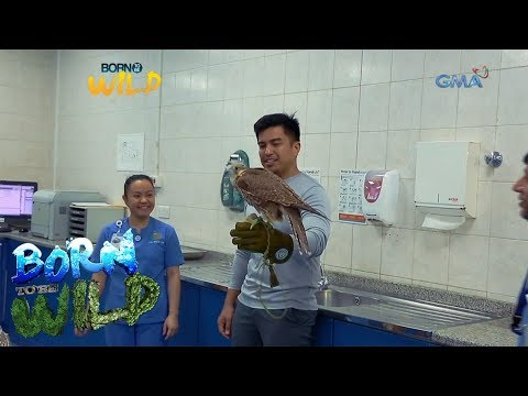 Born to Be Wild: Doc Ferds Recio visits a Falcon Hospital in Abu Dhabi, U.A.E.
