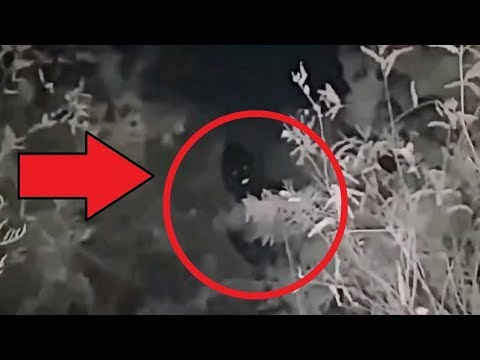 Top 10 Mysterious Creatures Encounter Caught On Camera! Scary Creatures