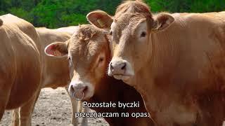 Gospodarstwo Rolne Zbigniew Szychulski