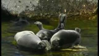 озеро байкал(видовой сюжет о байкале - объекте всемирного природного наследия., 2007-10-16T13:35:26.000Z)