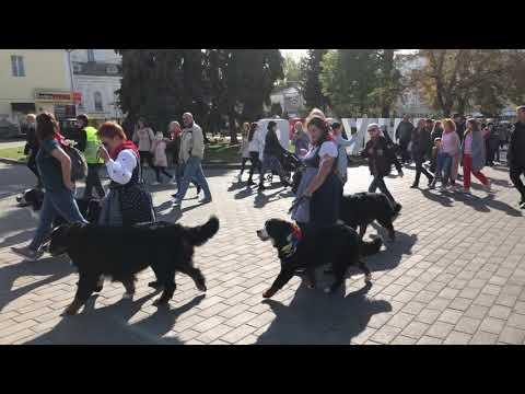 Волинські Новини: Парад зенненхундів у Луцьку. І