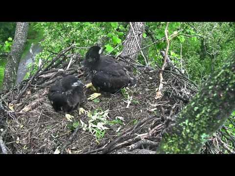DC Eagle Camera 5-4-2016 Morning