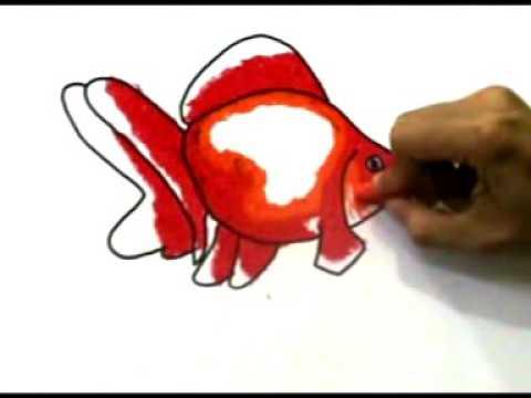Cara Menggambar Ikan Koki Youtube