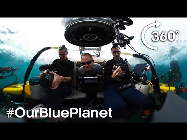 Journey 1000m Below The Waves In 360° #OurBluePlanet | BBC Earth