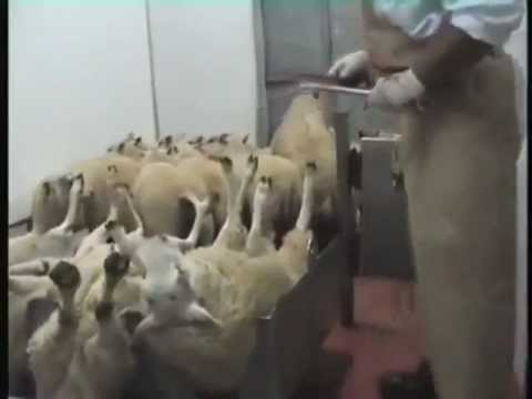 Ban religious slaughter in the European Union and throughout Europe