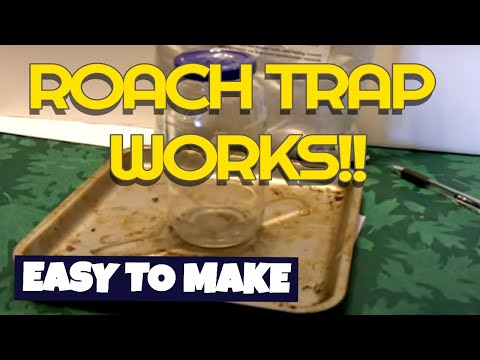 How to make a $1 Roach trap and end your bug problems for good!