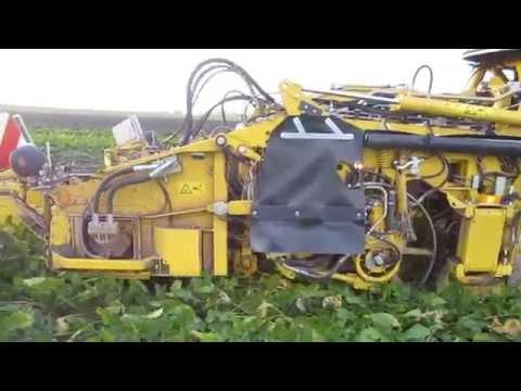 Beet harvest Sweden Tofta, 20151112