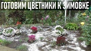 Цветники  осенью в ноябре   Готовлю клумбы к зимовке