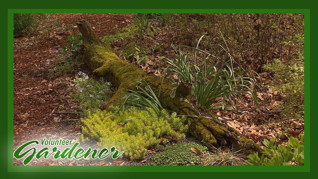 Woodland Garden | Volunteer Gardener - YouTube