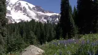 Journey Around the Mountain: Exploring Mount Rainier National Park