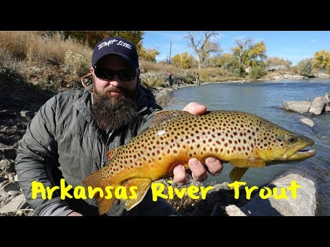 Arkansas River Trout Fishing