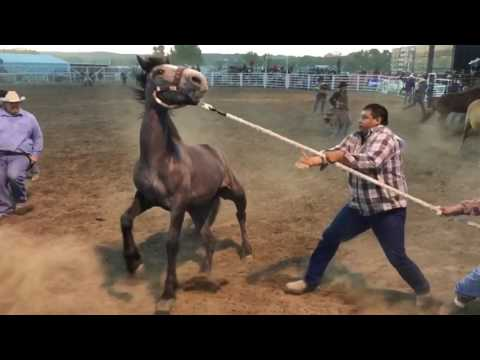 2 Wild Horse Races - Miles City Bucking Horse Sale 2017