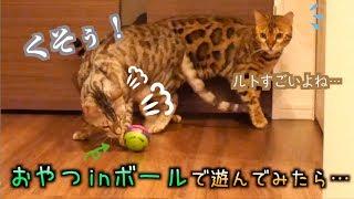 転がすとおやつが出てくるボールに苦戦する食いしん坊猫たち thumbnail
