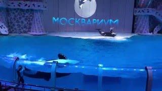 Шоу в Москвариуме. Океанариум на ВДНХ.