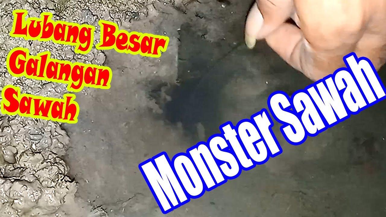 Monster Galangan Sawah, mancing belut di lubang besar
