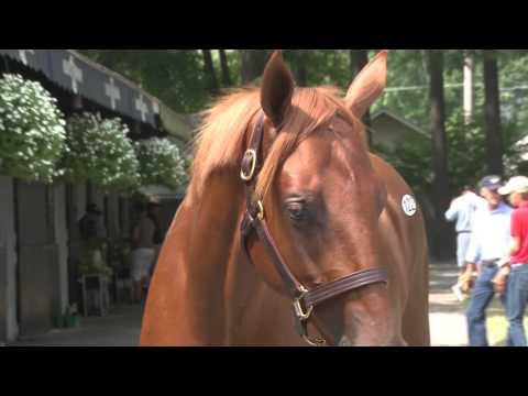 Fasig-Tipton Horse Auction, Saratoga Season 2012