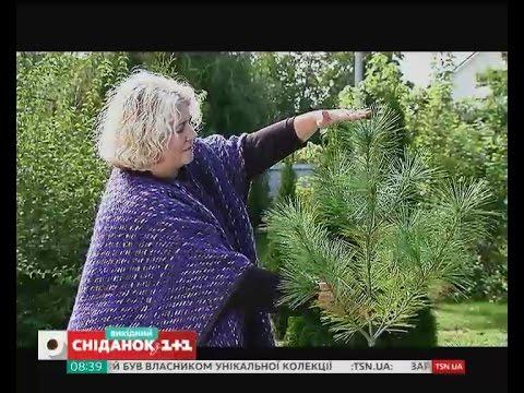 Сад за кілька років: найгарніші кущі та топ-5 швидкорослих дерев