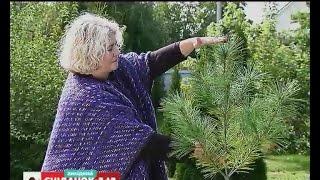 видео Самые красивые декоративные деревья для сада: названия с фото