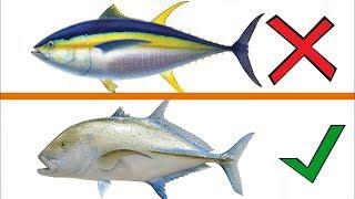 Asla Yemeyin ! - Herkesin Bilmesi Gereken Denizlerdeki 18 Zehirli Balık