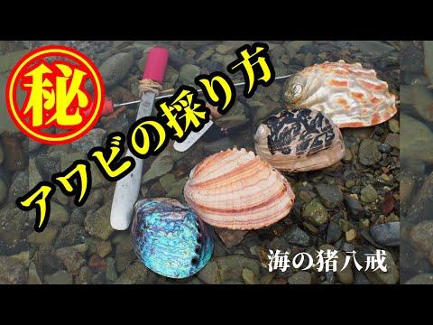 ㊙︎漁師が教えるHow toアワビの採り方 素潜り漁 海女