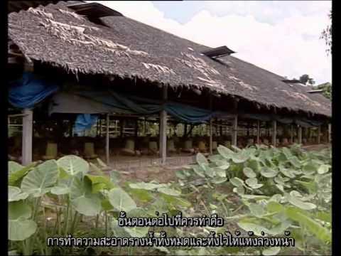Avian Vaccine [sub thai]