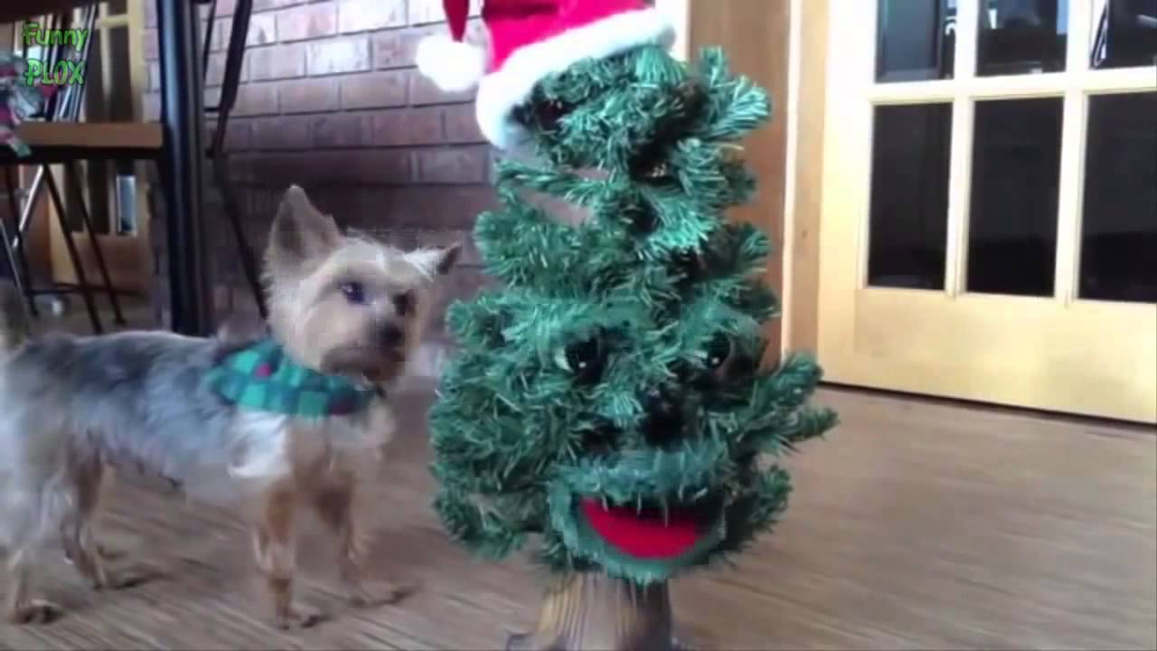 Best of christmas vines - The new year 2016 Christmas vines ...