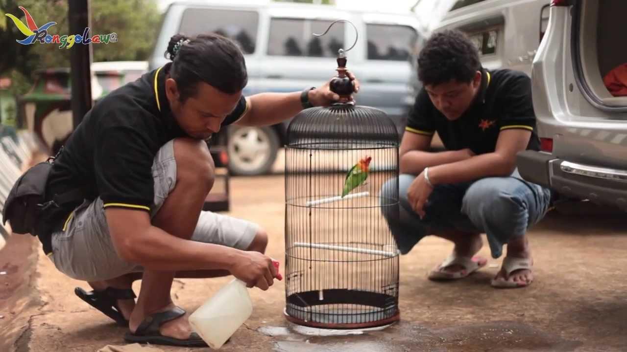 Hobi Burung Profil Happard Bird Club Mata Dewa Youtube