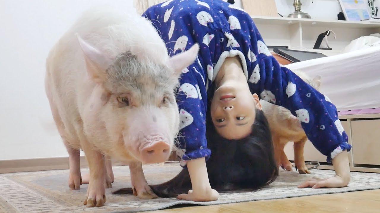 돼지들의 관심을 받고 싶은 엄마