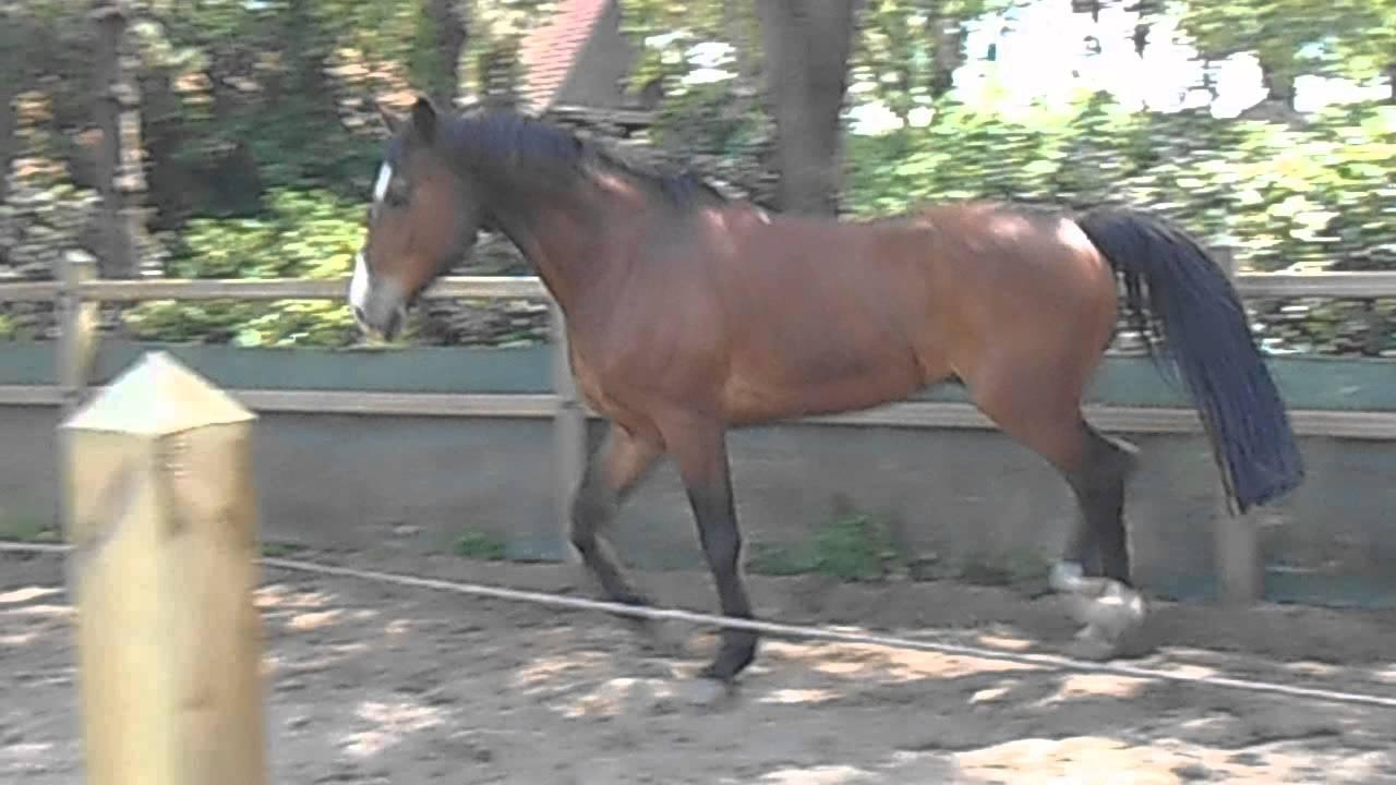 Paard te koop Kaya YouTube