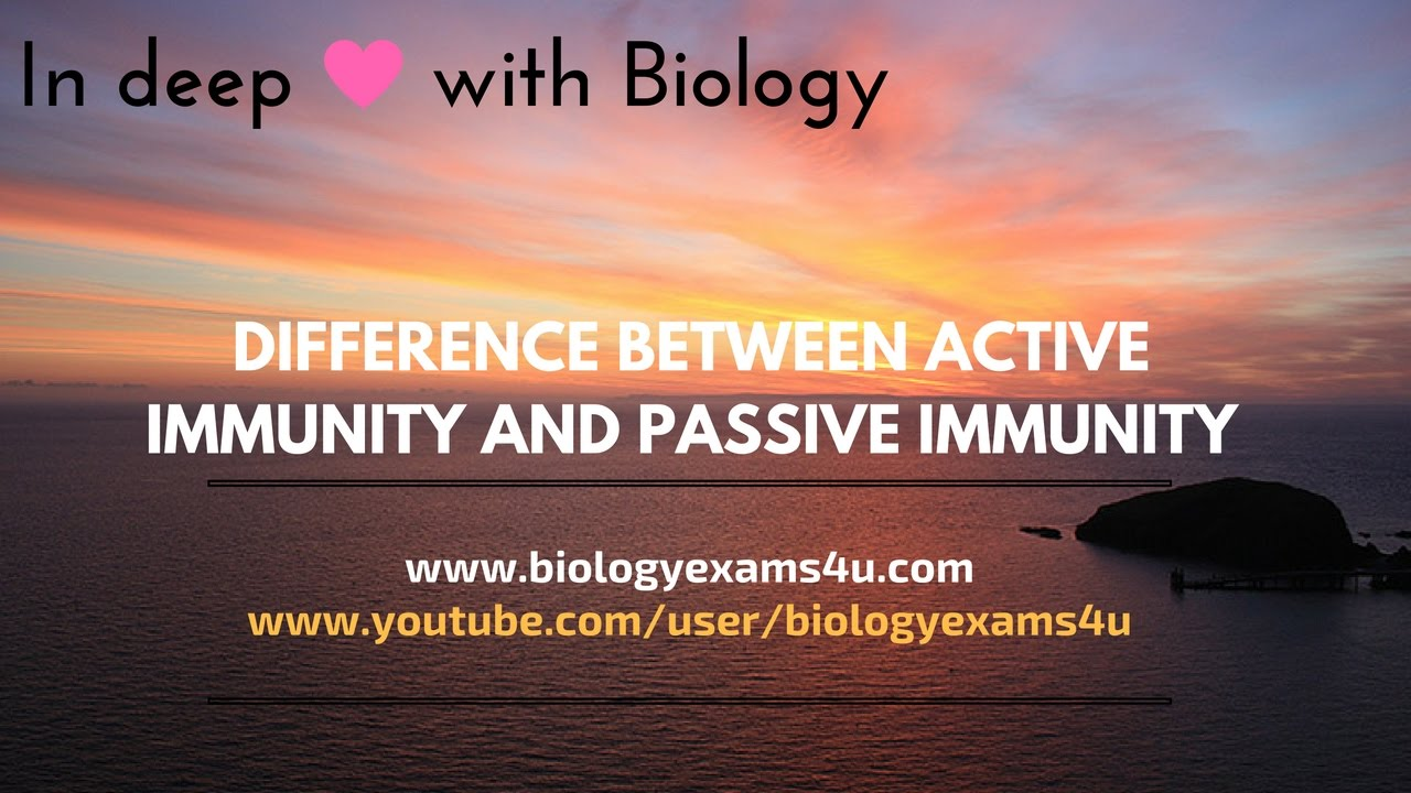 Difference Between Active Immunity And Passive Immunity Youtube